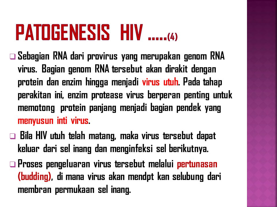 Patogenesis HIV …..(4)