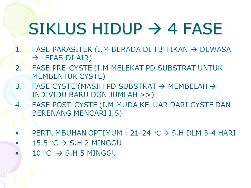 SIKLUS HIDUP  4 FASE FASE PARASITER (I.M BERADA DI TBH IKAN  DEWASA  LEPAS DI AIR) FASE PRE-CYSTE (I.M MELEKAT PD SUBSTRAT UNTUK MEMBENTUK CYSTE)
