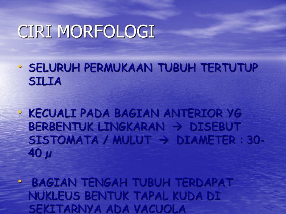 CIRI MORFOLOGI SELURUH PERMUKAAN TUBUH TERTUTUP SILIA
