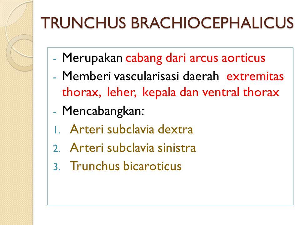 TRUNCHUS BRACHIOCEPHALICUS