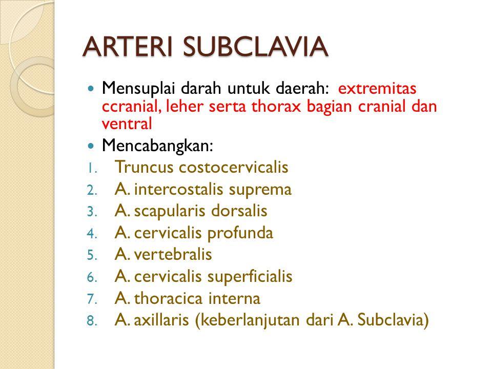 ARTERI SUBCLAVIA Mensuplai darah untuk daerah: extremitas ccranial, leher serta thorax bagian cranial dan ventral.