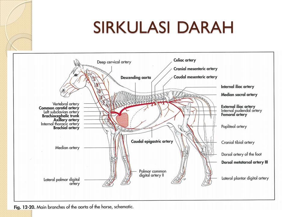 SIRKULASI DARAH