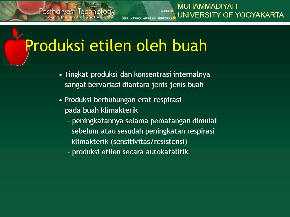 Produksi etilen oleh buah