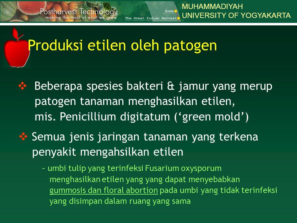 Produksi etilen oleh patogen
