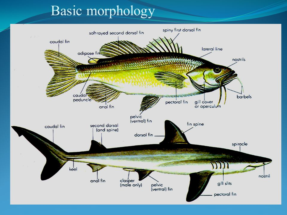 Basic morphology