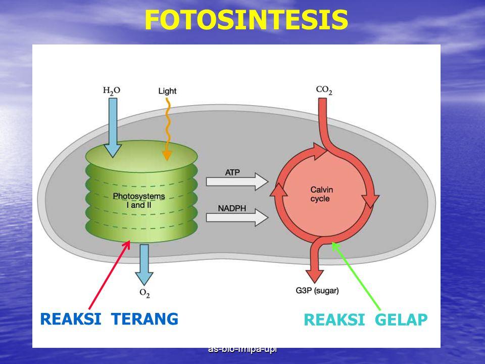 FOTOSINTESIS REAKSI TERANG REAKSI GELAP as-bio-fmipa-upi