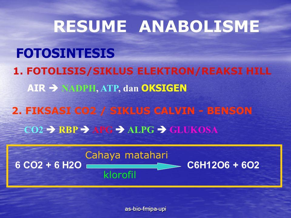 RESUME ANABOLISME FOTOSINTESIS