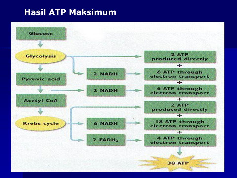 Hasil ATP Maksimum as-bio-fmipa-upi