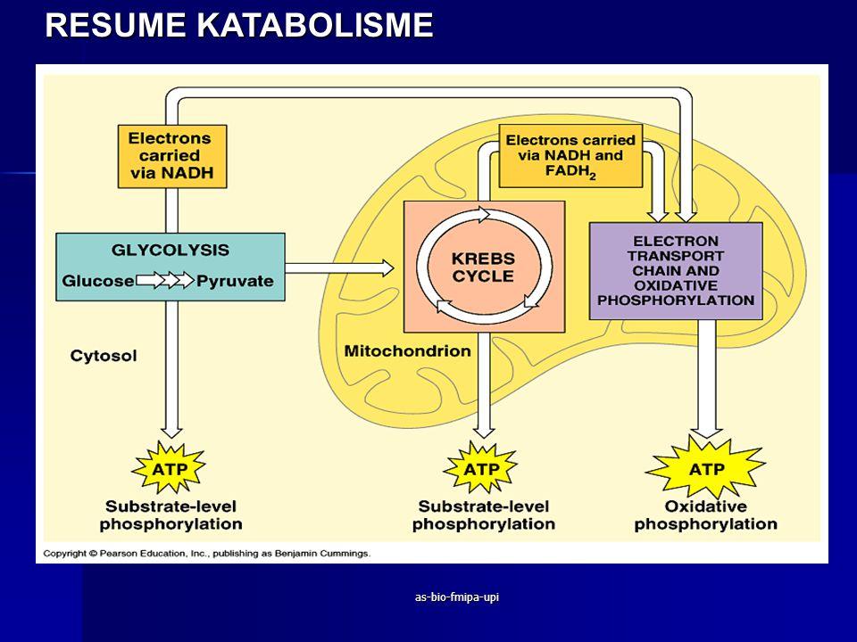 RESUME KATABOLISME as-bio-fmipa-upi