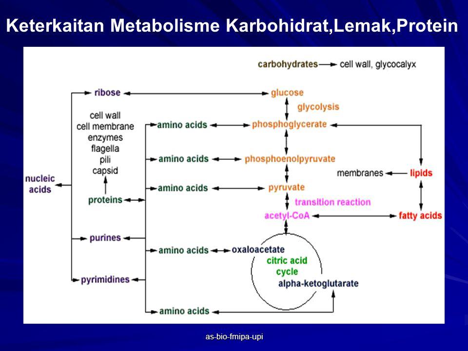 Keterkaitan Metabolisme Karbohidrat,Lemak,Protein