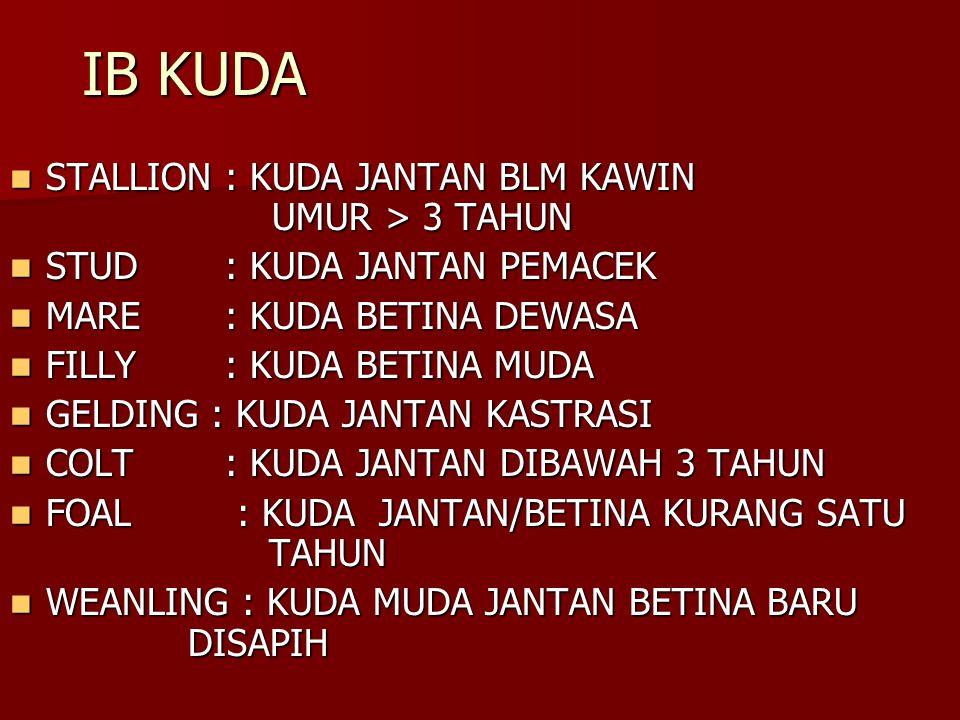 IB KUDA STALLION : KUDA JANTAN BLM KAWIN UMUR > 3 TAHUN