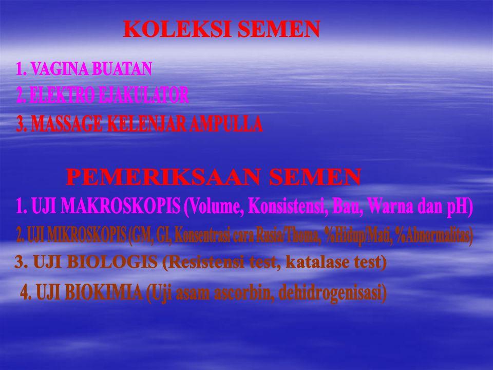 3. MASSAGE KELENJAR AMPULLA