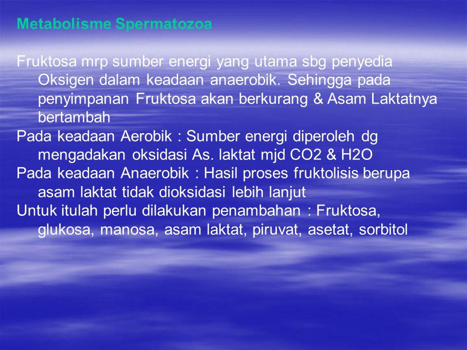 Metabolisme Spermatozoa