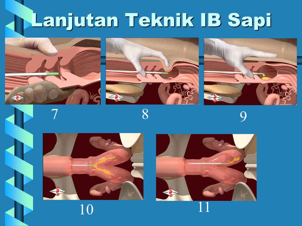 Lanjutan Teknik IB Sapi