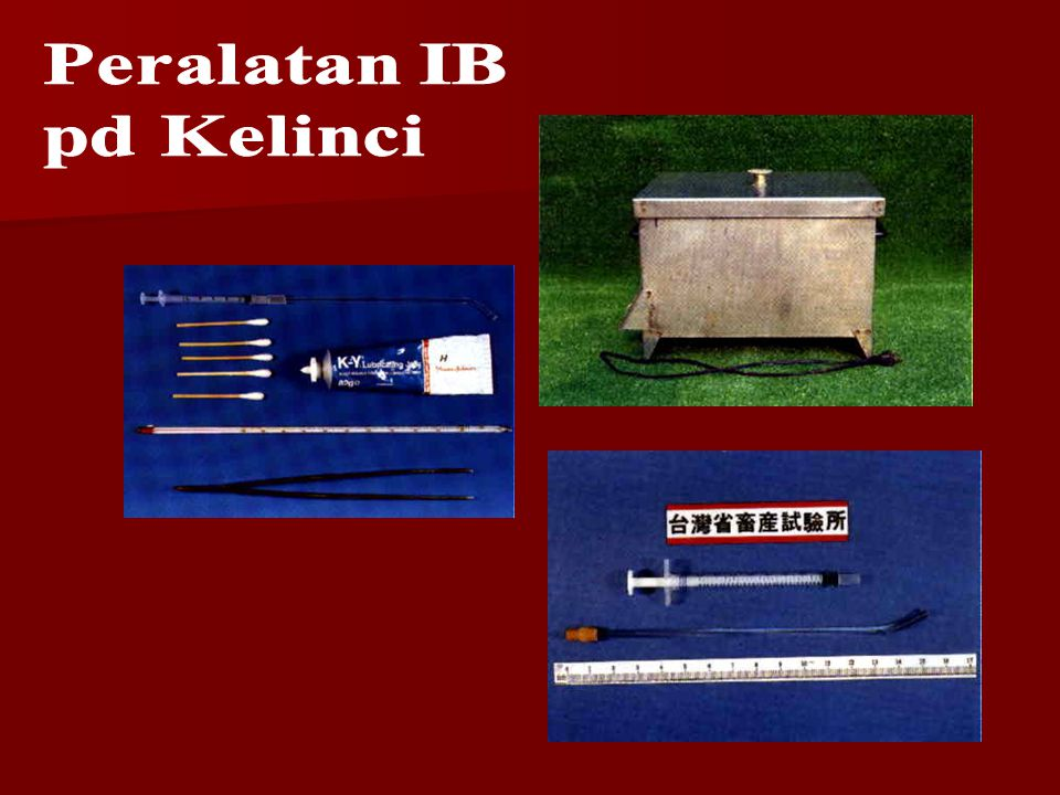 Peralatan IB pd Kelinci