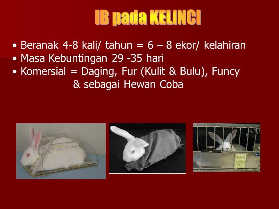IB pada KELINCI Beranak 4-8 kali/ tahun = 6 – 8 ekor/ kelahiran