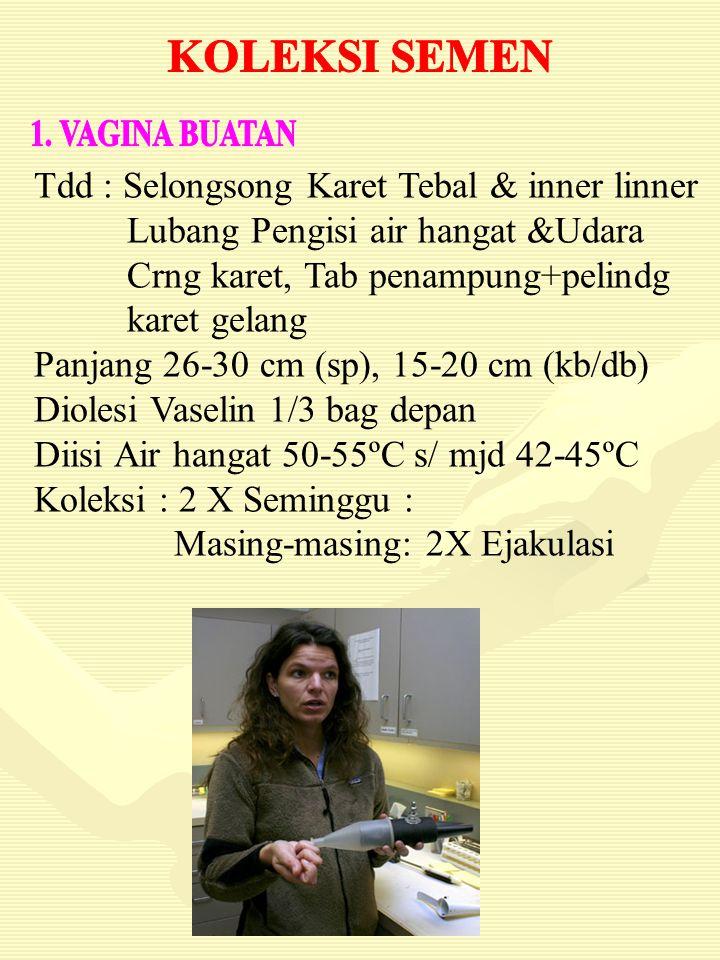 Tdd : Selongsong Karet Tebal & inner linner
