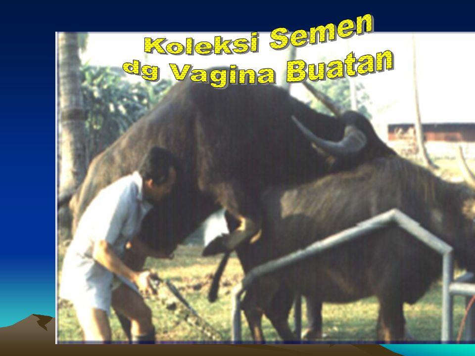 Koleksi Semen dg Vagina Buatan