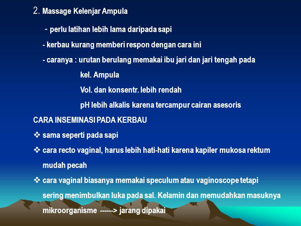 2. Massage Kelenjar Ampula - perlu latihan lebih lama daripada sapi