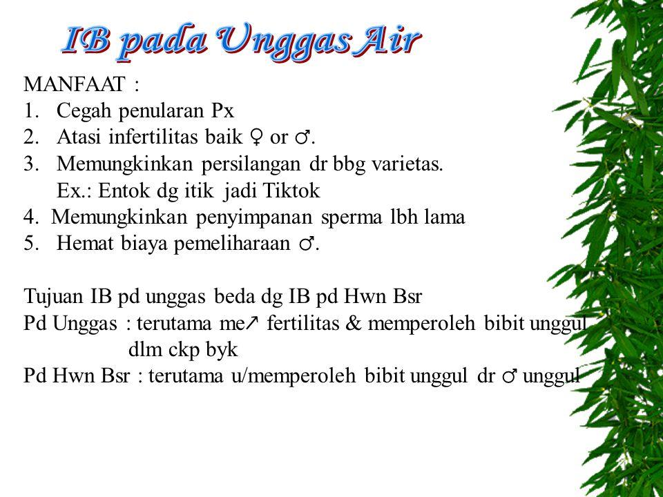 IB pada Unggas Air MANFAAT : Cegah penularan Px