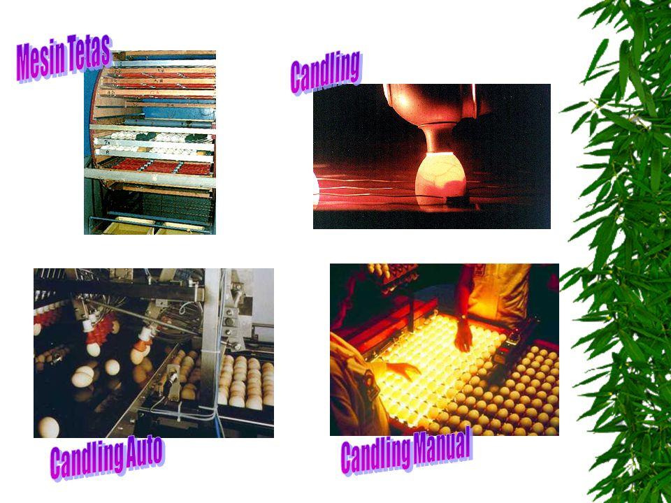 Mesin Tetas Candling Candling Manual Candling Auto