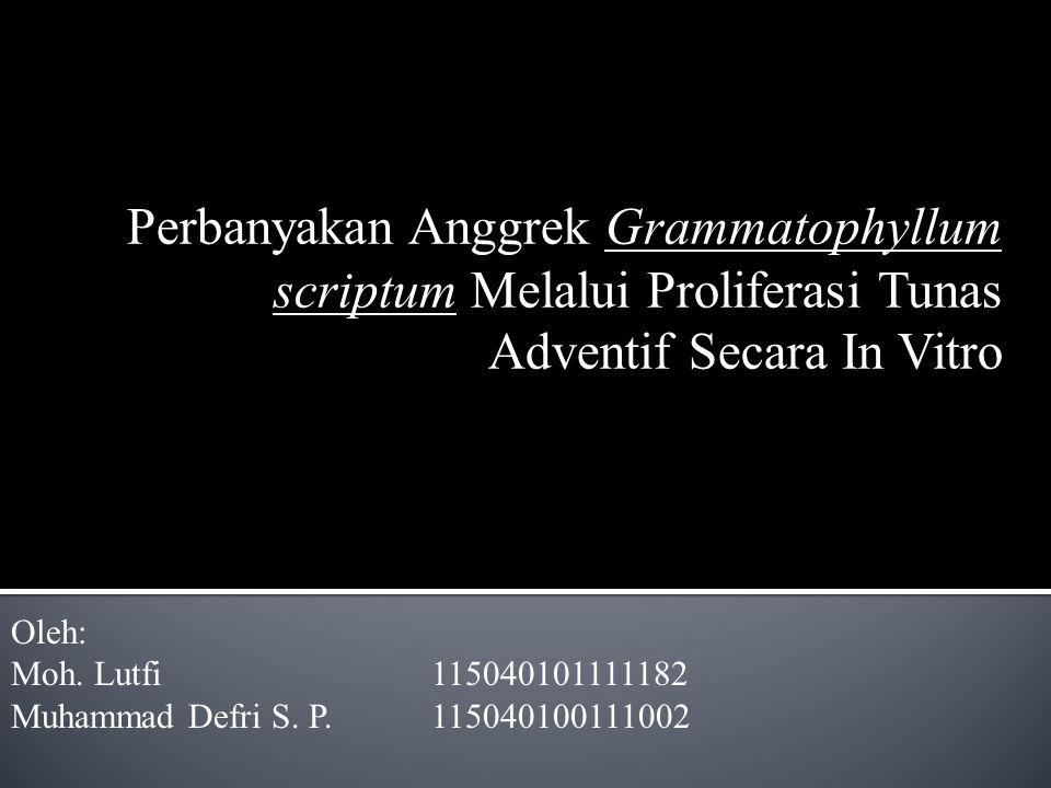 Perbanyakan Anggrek Grammatophyllum scriptum Melalui Proliferasi Tunas Adventif Secara In Vitro
