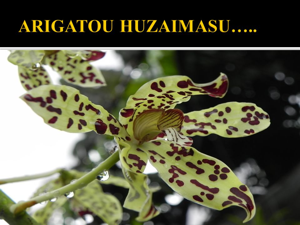 ARIGATOU HUZAIMASU…..