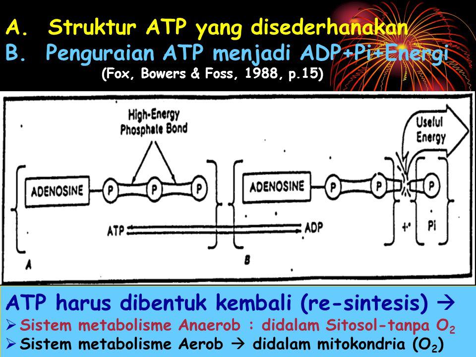 ATP harus dibentuk kembali (re-sintesis) 