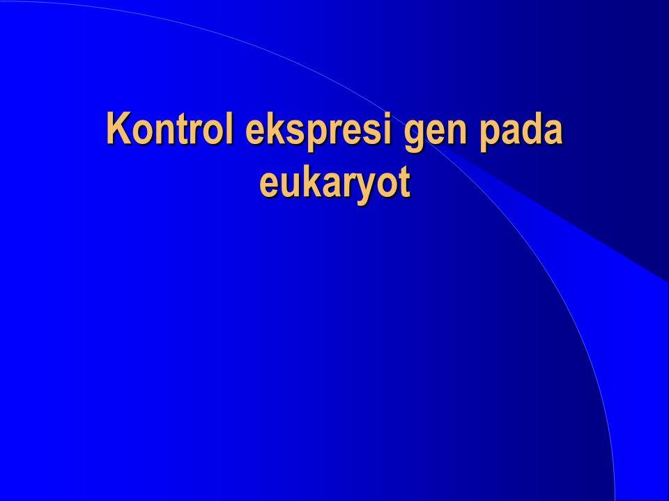 Kontrol ekspresi gen pada eukaryot
