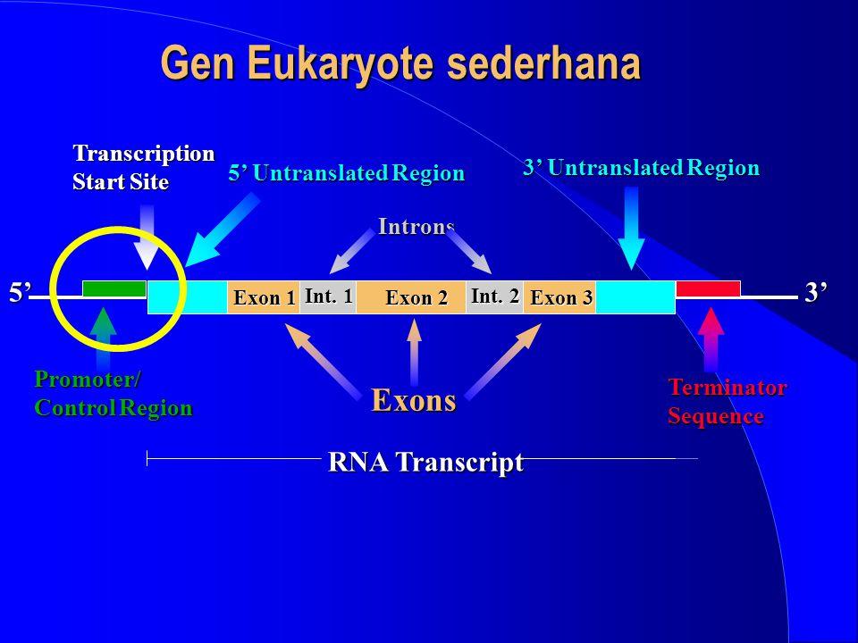 Gen Eukaryote sederhana