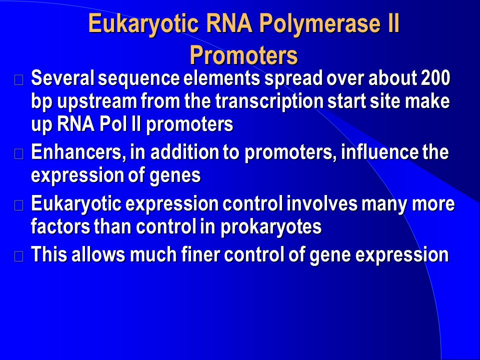 Eukaryotic RNA Polymerase II Promoters
