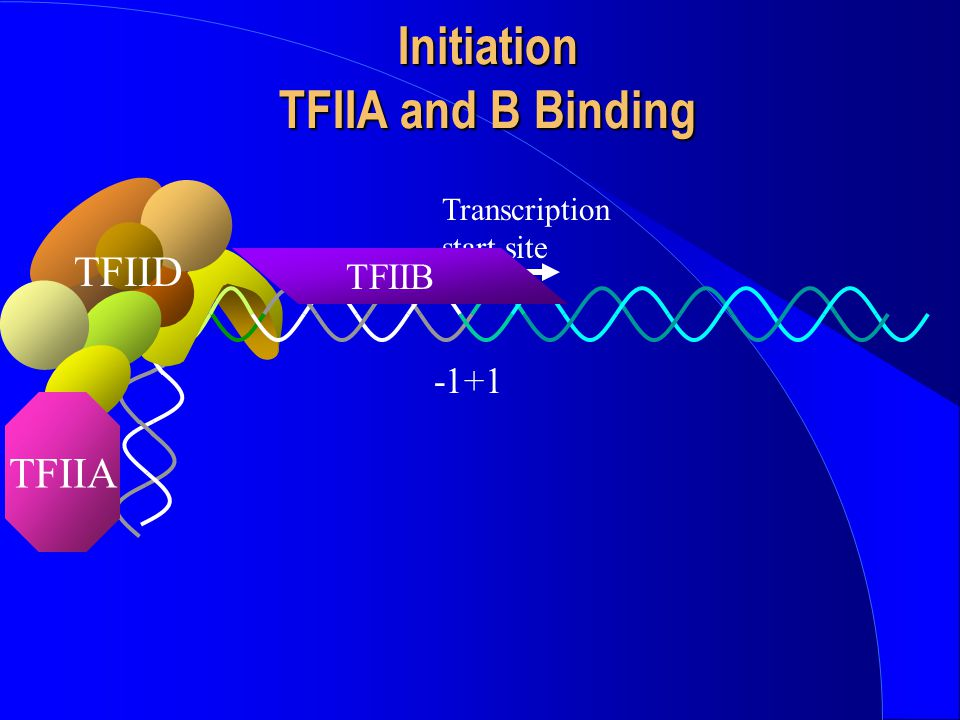 Initiation TFIIA and B Binding