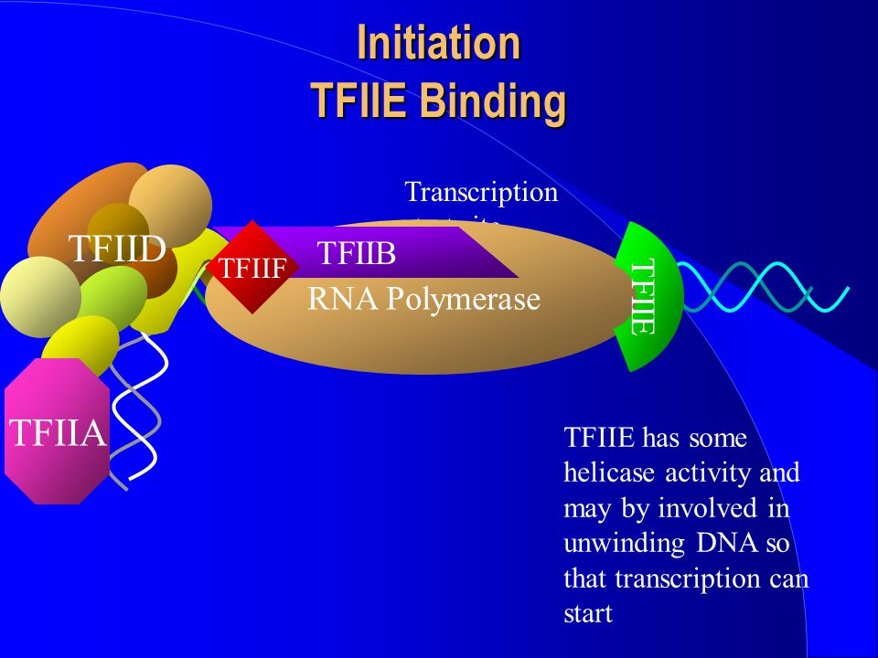 Initiation TFIIE Binding
