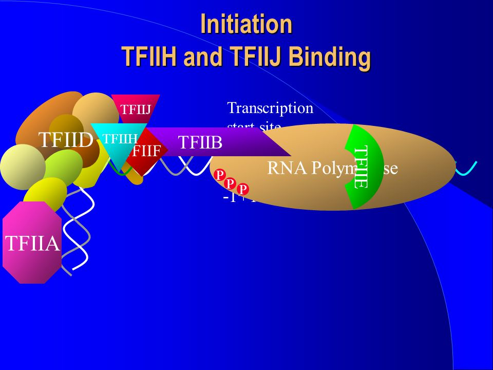 Initiation TFIIH and TFIIJ Binding