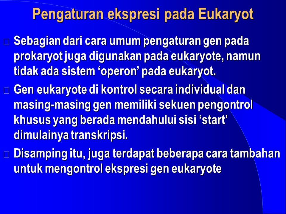Pengaturan ekspresi pada Eukaryot