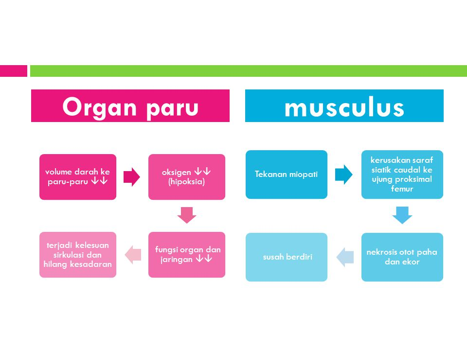 musculus Organ paru Tekanan miopati