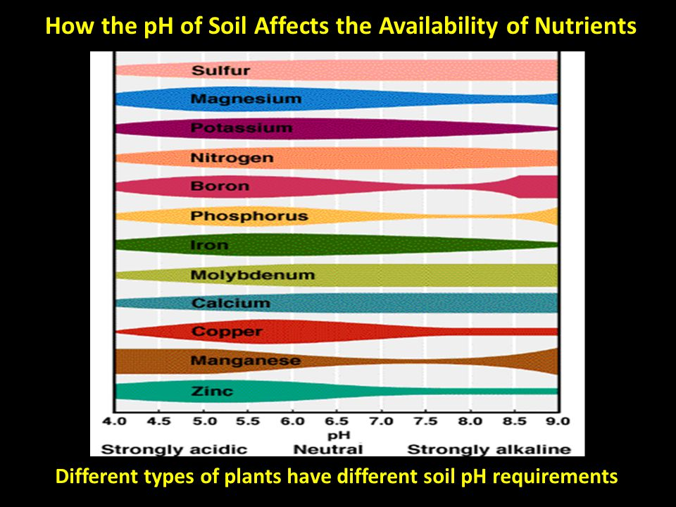 How the pH of Soil Affects the Availability of Nutrients