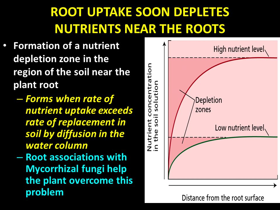 ROOT UPTAKE SOON DEPLETES NUTRIENTS NEAR THE ROOTS