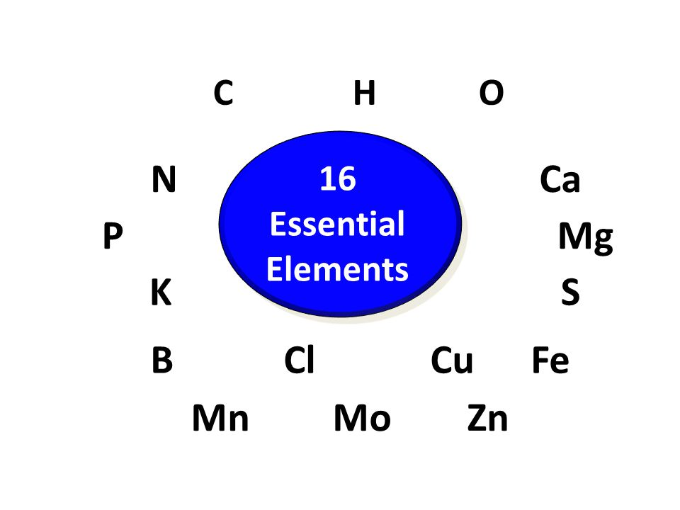 C H O N Ca 16 Essential Elements P Mg K S B Cl Cu Fe Mn Mo Zn