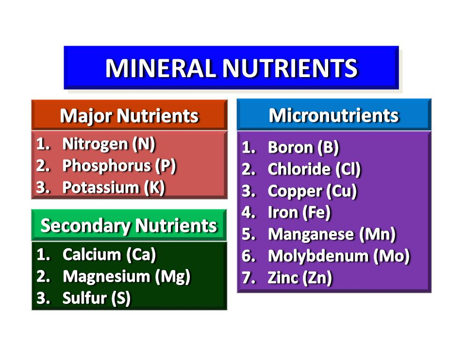 MINERAL NUTRIENTS Major Nutrients Micronutrients Secondary Nutrients