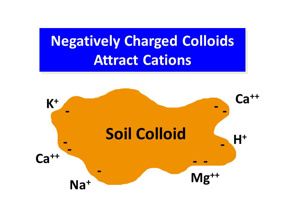 Negatively Charged Colloids Attract Cations