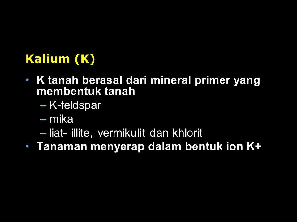 Kalium (K) K tanah berasal dari mineral primer yang membentuk tanah. K-feldspar. mika. liat- illite, vermikulit dan khlorit.