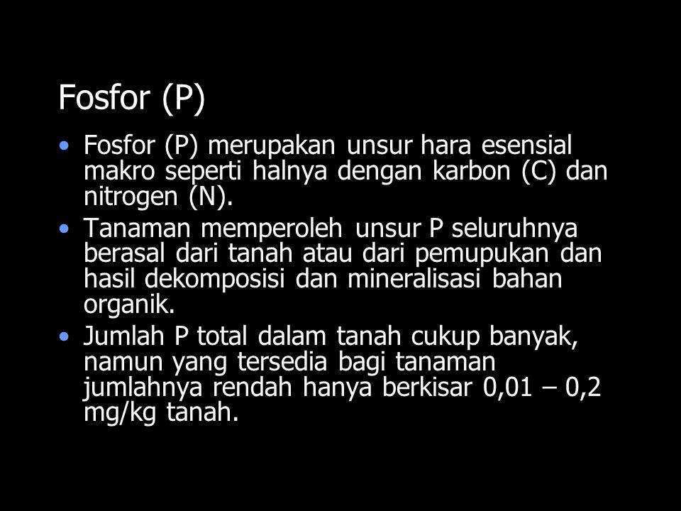 Fosfor (P) Fosfor (P) merupakan unsur hara esensial makro seperti halnya dengan karbon (C) dan nitrogen (N).