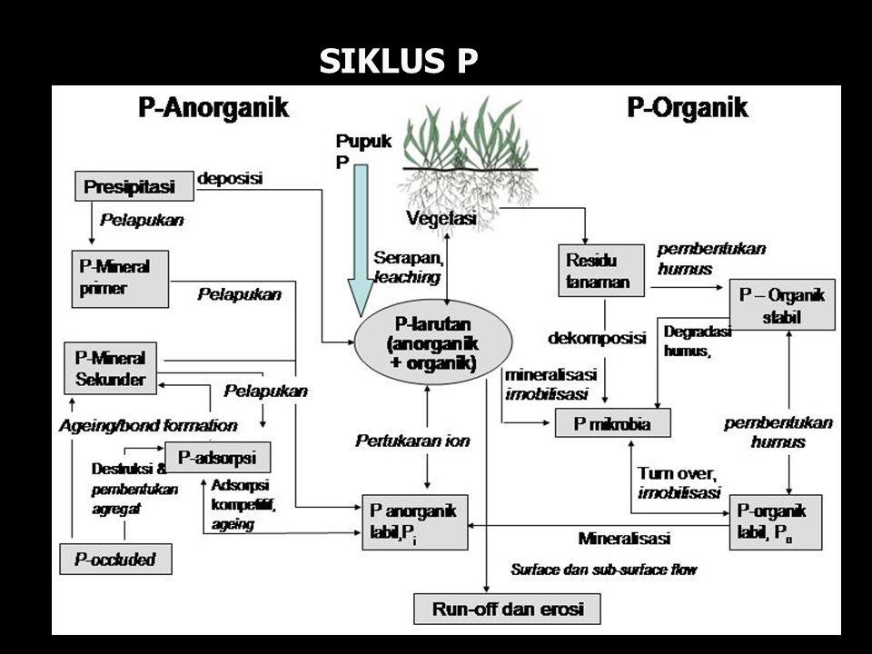 SIKLUS P
