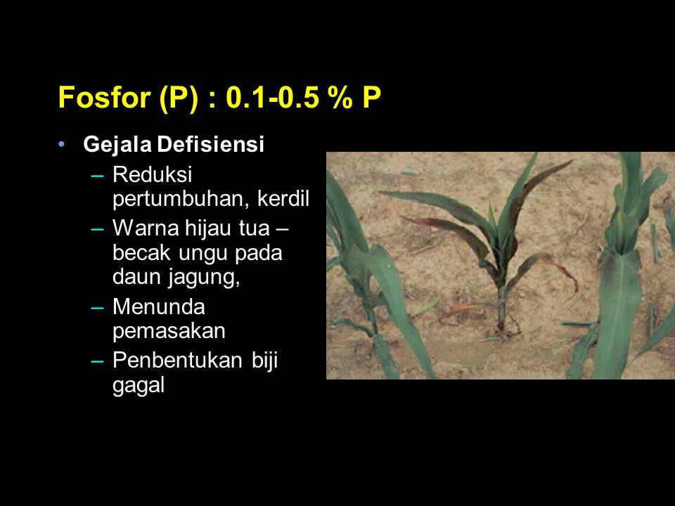 Fosfor (P) : 0.1-0.5 % P Gejala Defisiensi Reduksi pertumbuhan, kerdil