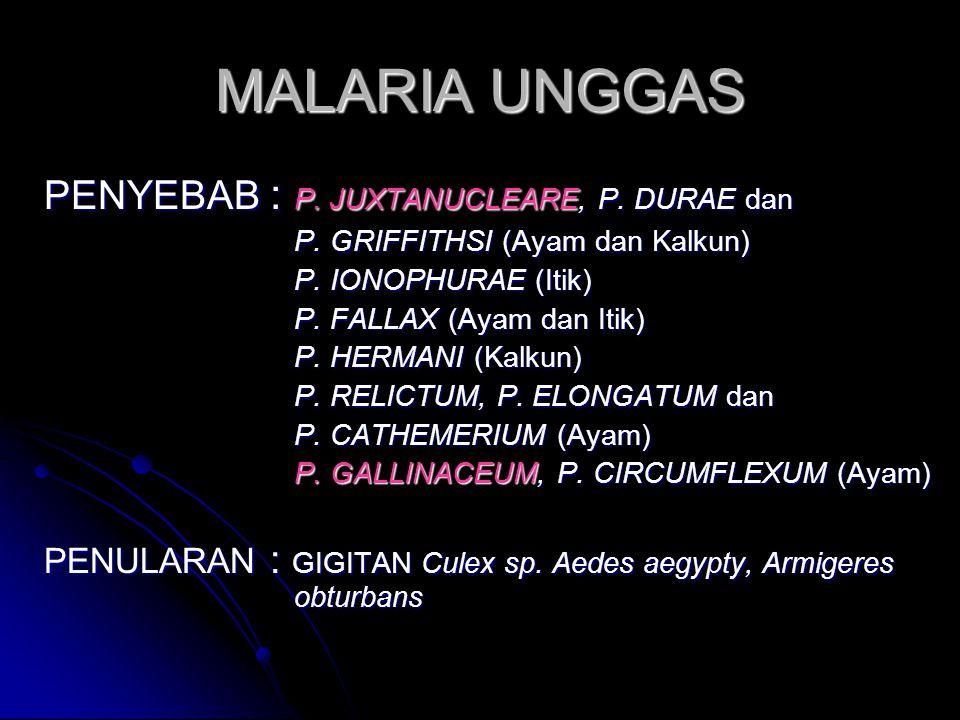 MALARIA UNGGAS PENYEBAB : P. JUXTANUCLEARE, P. DURAE dan