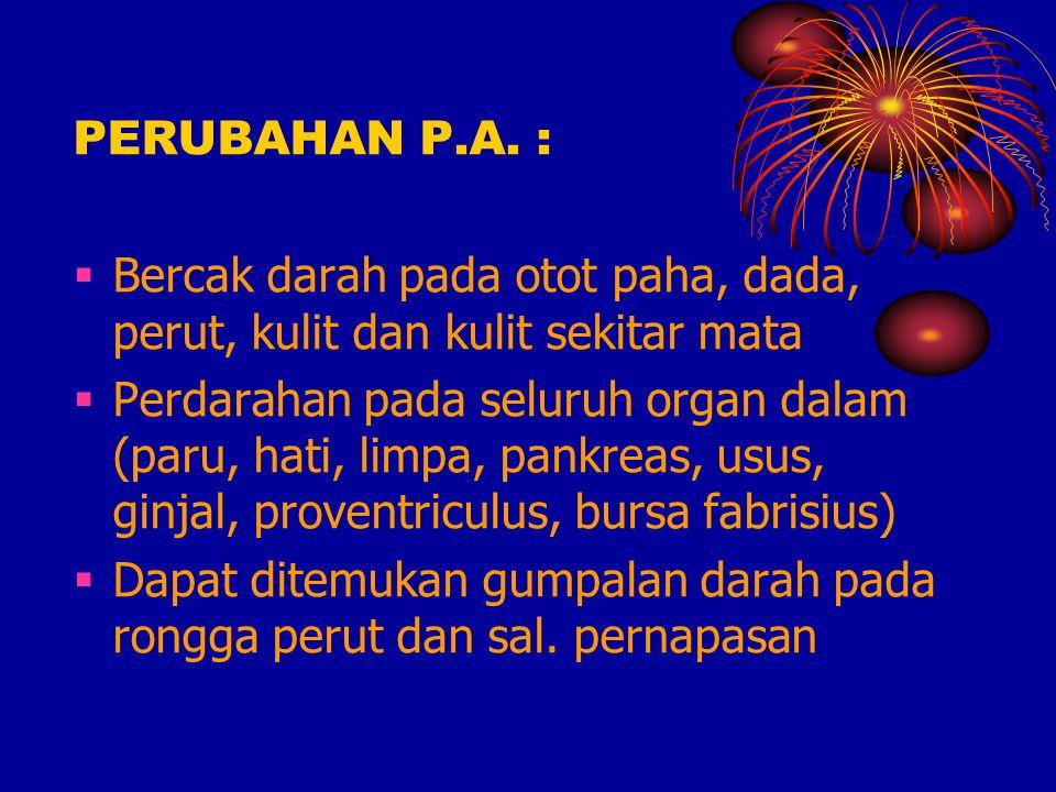 PERUBAHAN P.A. : Bercak darah pada otot paha, dada, perut, kulit dan kulit sekitar mata.
