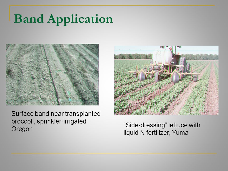 Band Application Surface band near transplanted