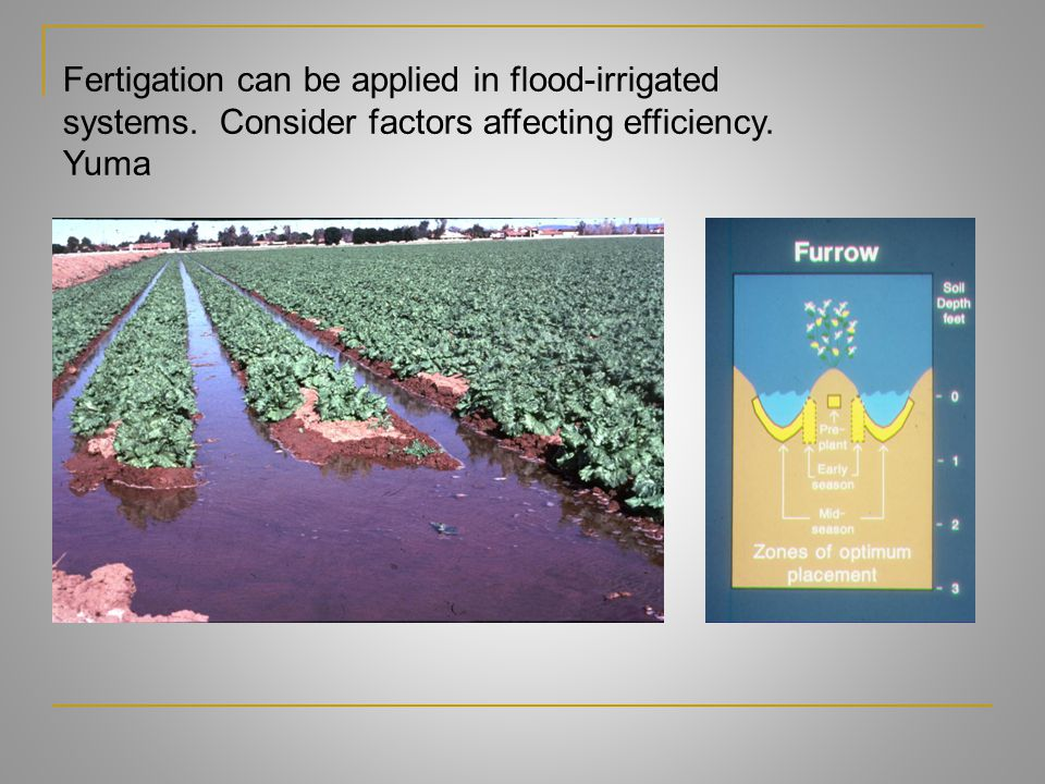 Fertigation can be applied in flood-irrigated
