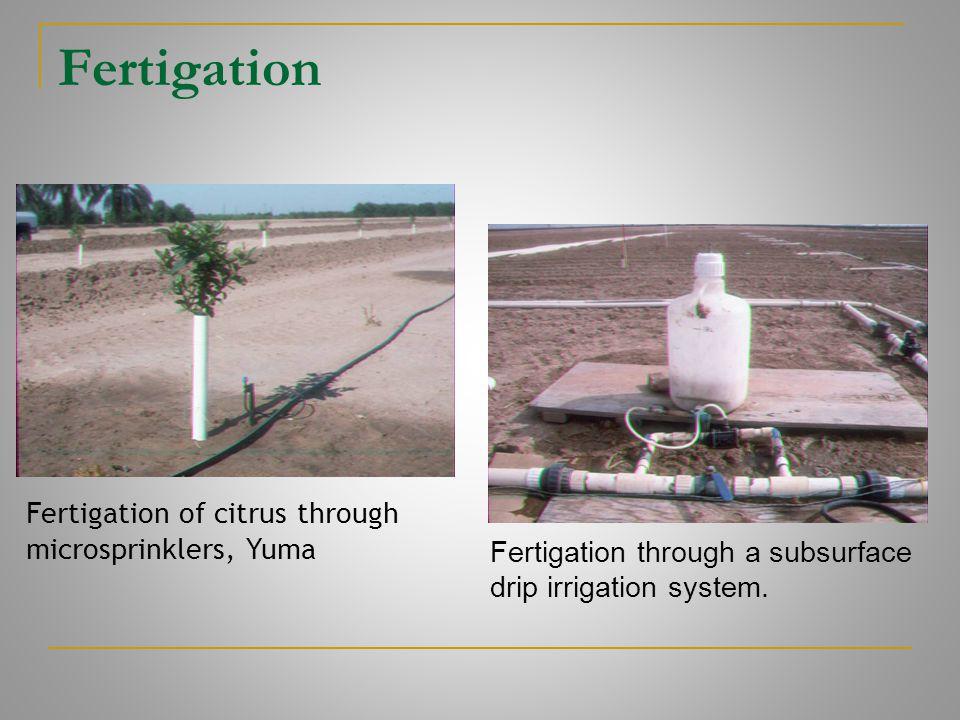 Fertigation Fertigation of citrus through microsprinklers, Yuma